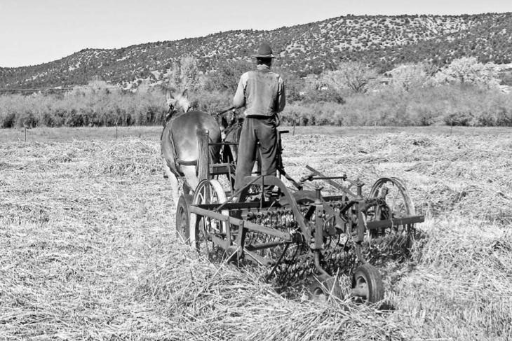 Organic Farming & Inspiration
